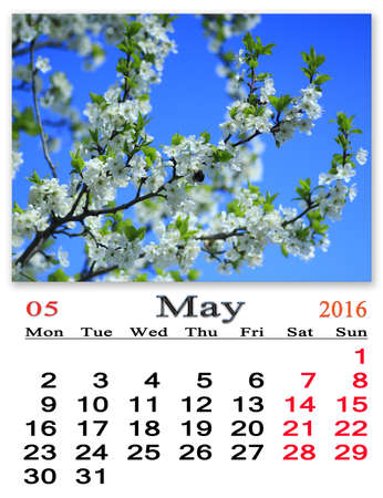 calendario: calendar for May 2016 on the background of flying bumblebee