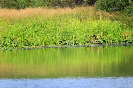 morass: high green thicket growing on the pond