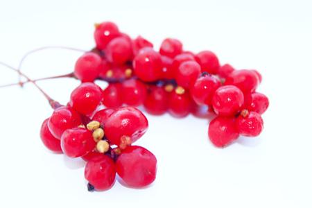 빨간색 잘 익은 오미자의 분기 흰색에 격리 스톡 콘텐츠 - 47207847