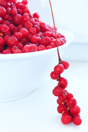 officinal: branch of red ripe schisandra isolated on the white