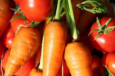 tomate: rich crop of ripe carrots and tomatoes