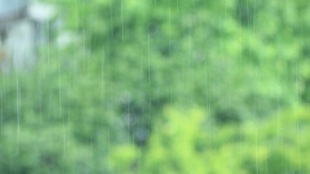 trickle down: its raining behind the window in the forest Stock Photo