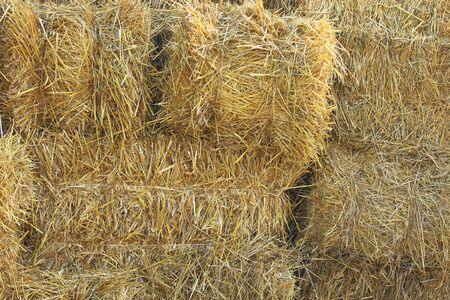 hayloft: straw stacked in bales in the farm Stock Photo