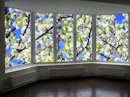 cherrytree: window to the garden with bee flying above blossoming cherry-tree