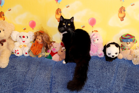 comfortableness: black cat sits in the nursery next to the toys Stock Photo