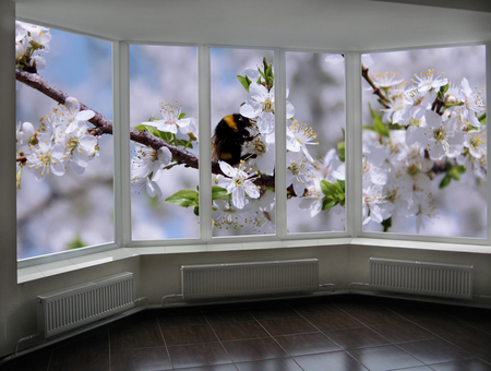 cherrytree: window to the garden with bumblebee flying above blossoming cherry-tree