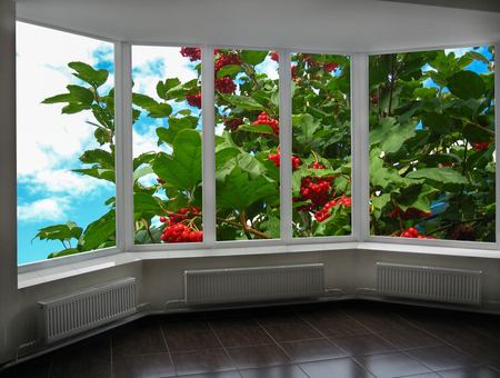 guelderrose: windows overlooking the garden with red ripe guelder-rose
