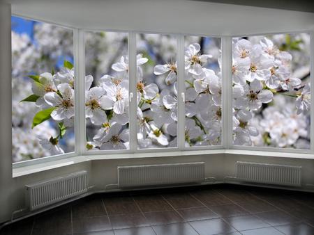cherrytree: window in veranda overlooking the garden with blossoming cherry-tree