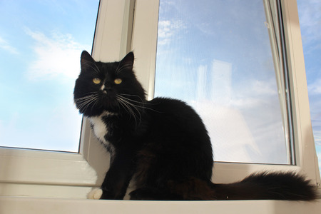 black head and moustache: black cat sits on the window-sill of balcony