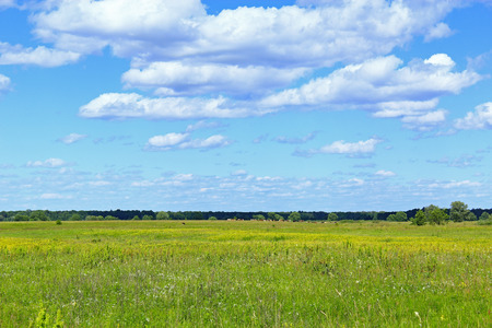 tranquillity: summer field of grass and blue sky with white clouds. Green grass in the meadow
