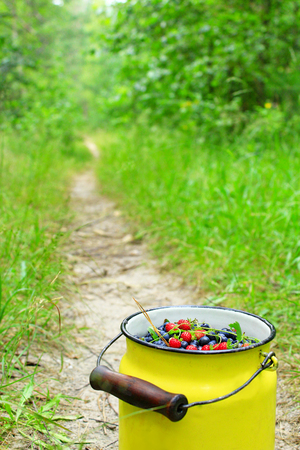 bilberries: small can full of bilberries and wild strawberries on the forest path