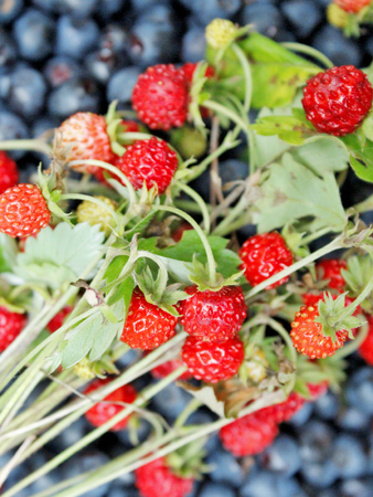 bilberries: crop of bilberries and wild strawberries with green leaves Stock Photo