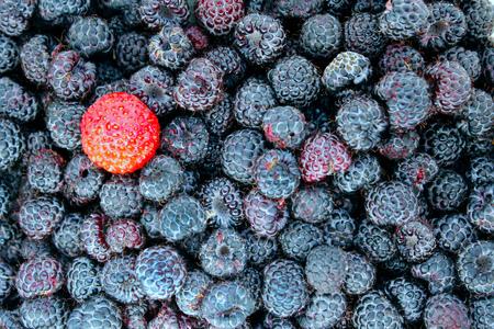 black raspberries: strawberry on the background of black raspberries Stock Photo