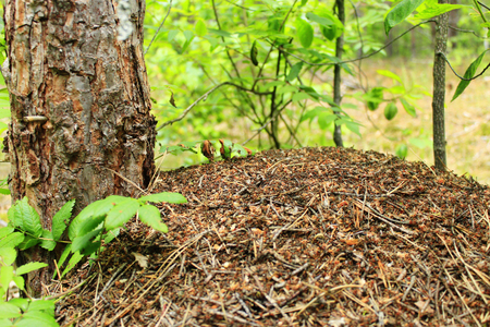 feeler: life in the big ant hill in the forest