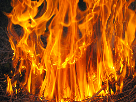 ignited: forest body of flame inflaming in a field
