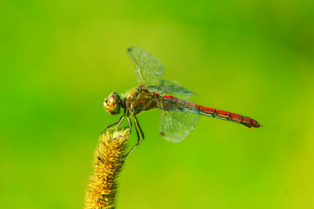 macro of dragonfly sitting on the herbal plant Stock Photo