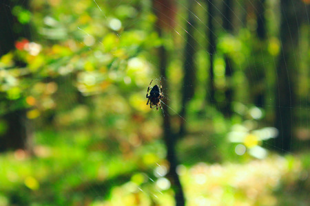 dreadful: spider on the web on the green forest background