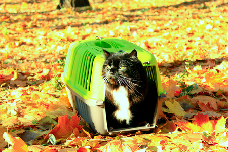 autumn cat: cat looks out from in cage in the Autumn park