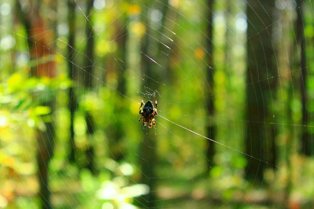 spider on the web on the green forest background