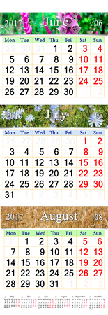 next year: office calendar for three months June July and August 2017 with pictures of Cichorium bluebell lilies and wheat