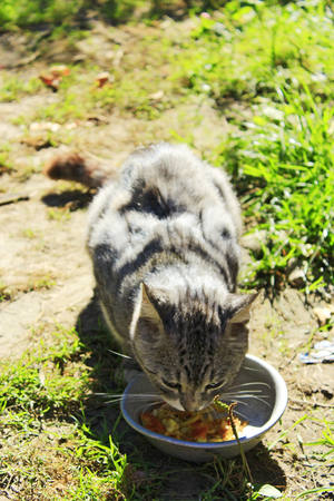 rural cat eats from dish on the path