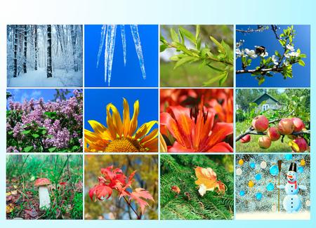blanco met verschillende twaalf gekleurde beelden van de natuur voor kalender