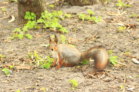 elusive: squirrel on the ground Stock Photo