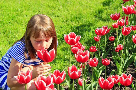 smells: little girl smells red tulips on the flower-bed Stock Photo