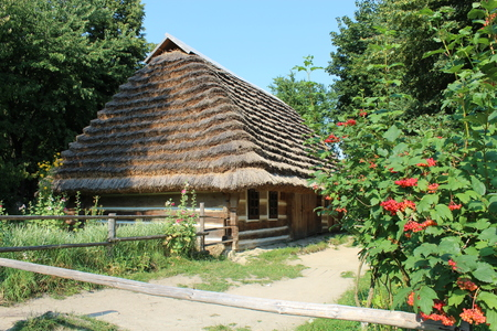 Bush of clustered red and ripe guelder-rose besides an old rural house in Lviv
