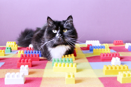 black cat sprawled on the colorful sofa between the meccano Stock Photo
