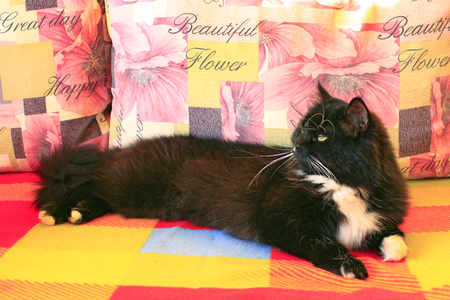 black cat sprawled on the colorful sofa Stock Photo