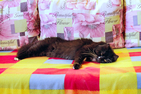 black cat sleeps on the colorful sofa Stock Photo