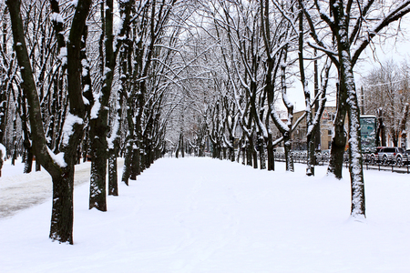 snowdrifts: winter park with many big trees and path