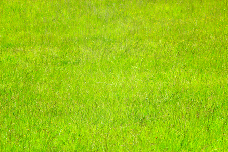 high green grass on the meadow in the summer