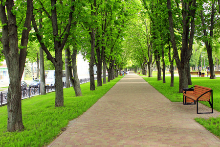 thicket: beautiful park with nice promenade path and big green trees