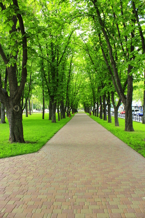 thicket: beautiful park with nice promenade path green grass benches and high big trees Stock Photo