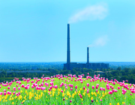 flower bed of different tulips and factory chimney with pollution of environment by industry on the background Reklamní fotografie