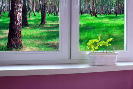 furniture design: Seedlings of oaks on the window sill of window overlooking the grove