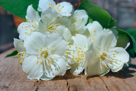 white flowers of jasmine on the wooden background