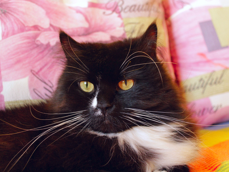 close-up of muzzle of black cat