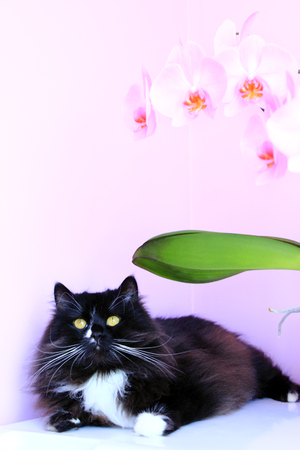 black cat and beautiful pink orchids on the background