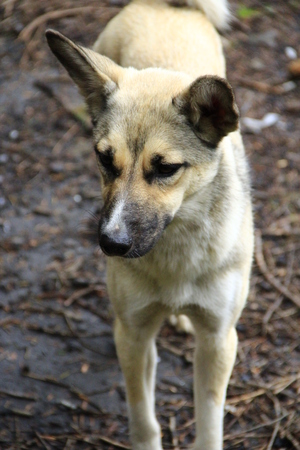 White nice mongrel stands on the ground. Curious dog looking at camera. Homeless mongrel dog waiting for new owner. 스톡 콘텐츠