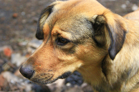Brown sad mongrel standing on ground. Curious dog looking sadly. Homeless mongrel dog waiting for new owner