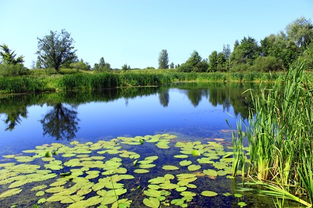 Beautiful summer landscape with picturesque pond with water-lilies. Summer lake. Landscape with summer lake