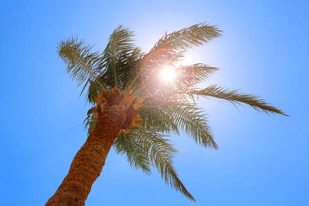 Sun rays make their way through branches of palm tree. Travel concept. Tropical recreation. Vacations in tropics. Lifestyle concept. High tree. African sun