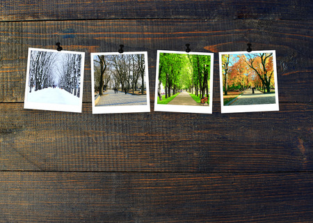 Four seasons on wooden background. Photos of four seasons attached to dark wooden wall. Four photos of same park taken at different times of year. Different times of year spring, summer, autumn,winter