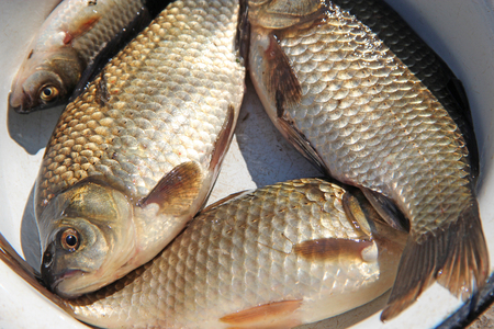 Successful fishing. Caught crucians in plate. Natural ingredients for healthy nutrition. Fresh fish caught in fishing Standard-Bild