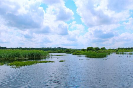 Landscape with lake surrounded with cane. Brushwood of rush in lake. Beautiful natural landscape with pond and clouds