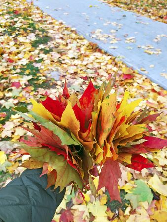 Dry multicolored leaves in human hand. Autumn concept. Yellow and red leaves in human hand. Bunch of colorful autumn leaves