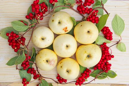 Schisandra and white apples. Still life with clusters of ripe schizandra and white apples. Harvest with red schisandra chinensis plants with ripe fruits and apples. Schizandra omija of Korea Stock fotó
